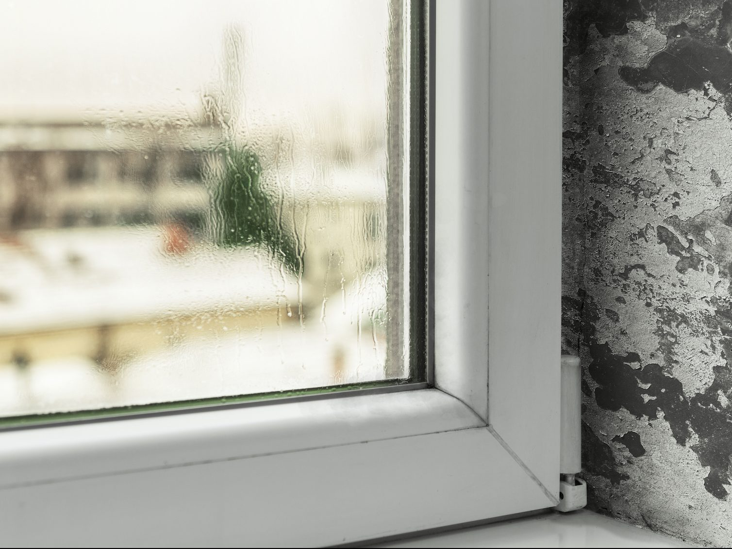 condensation on window and mold growth