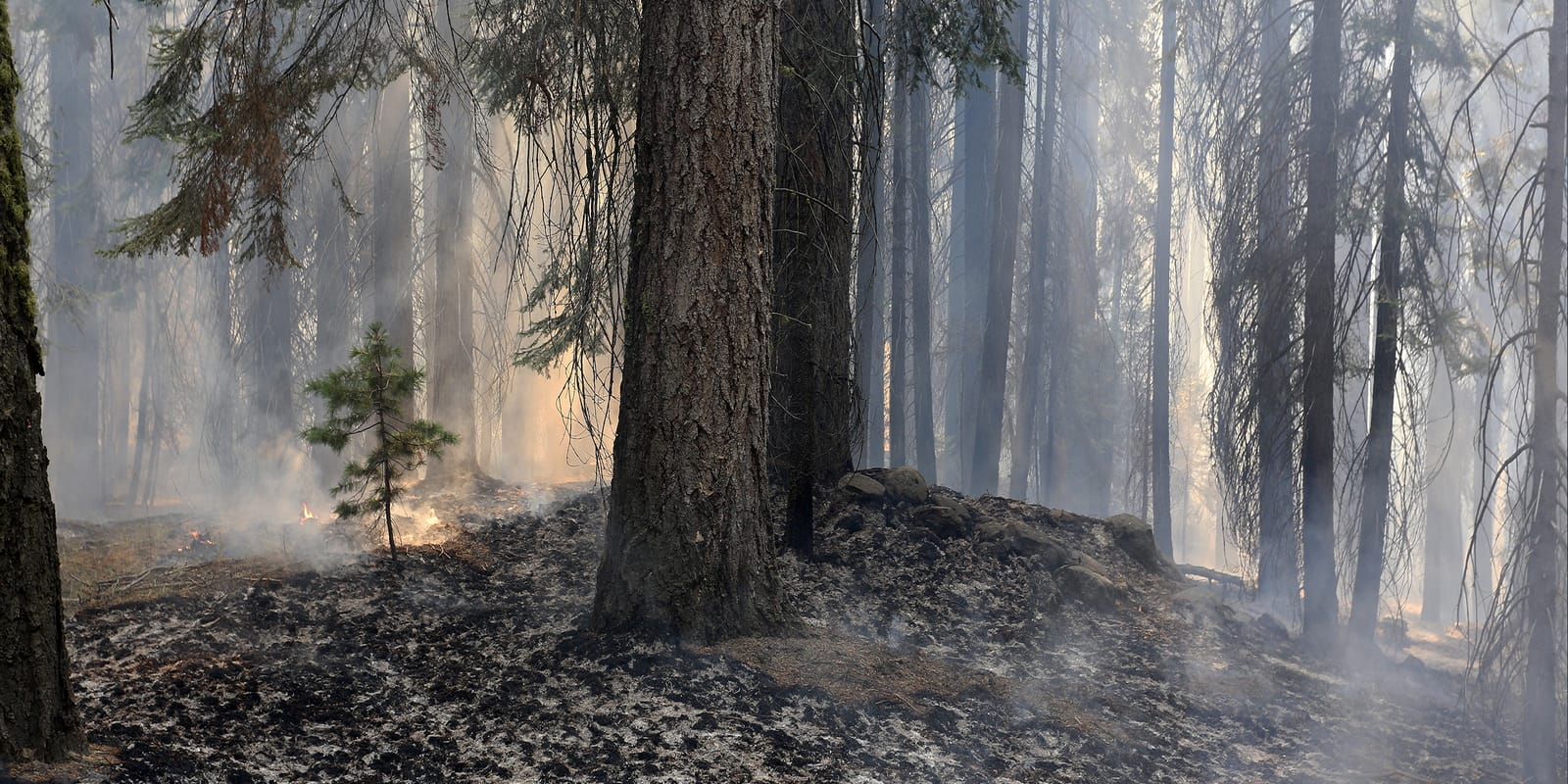 Air purifier for wildfire smoke - trees surrounded by smoke