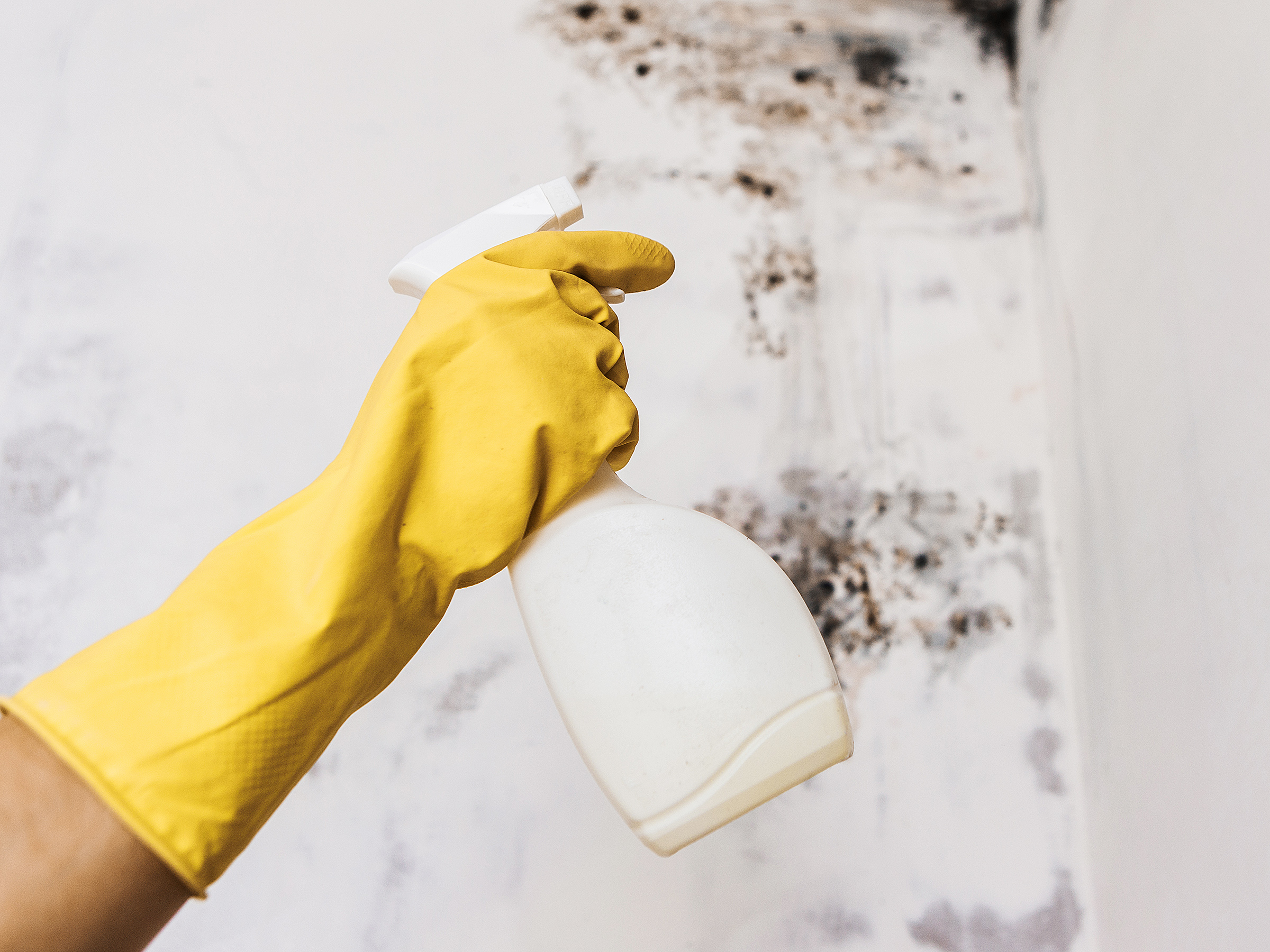 yellow rubber-gloved hand holding spray bottle in front of moldy/mildew wall
