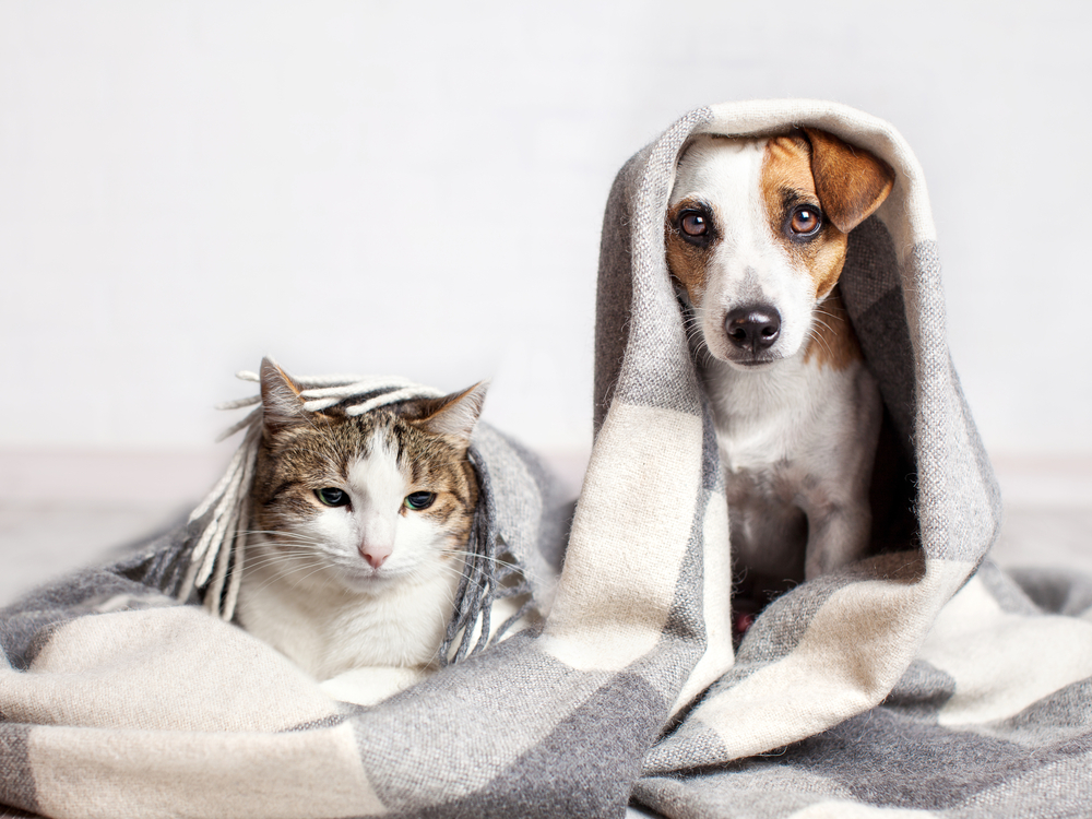 Cat and dog pet dander