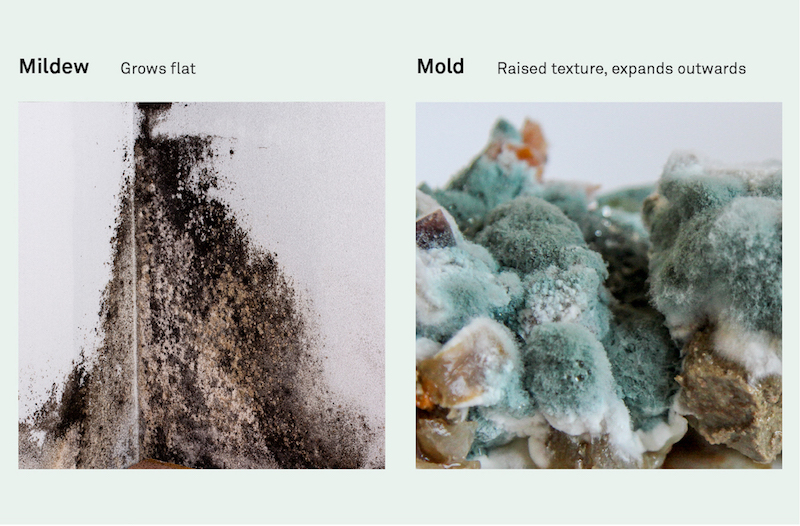 Mildew vs. Mold: Mildew appears as a flat growth pattern, while mold appears as a raised texture.