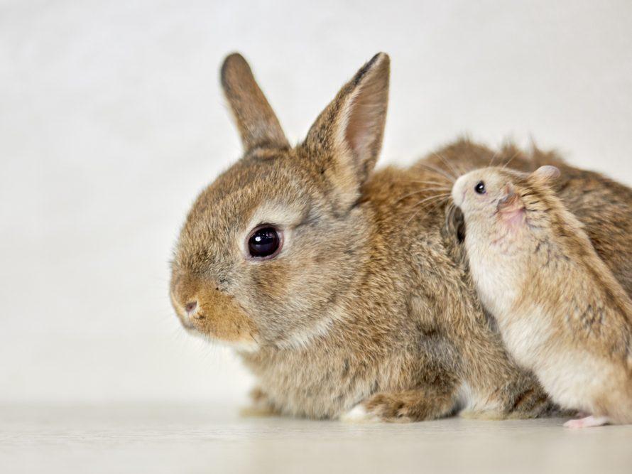 Popular small furry pet animals