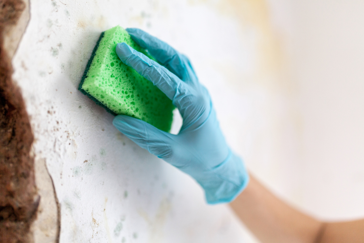 mold cleanup in the home