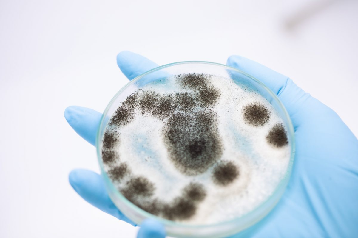 mold growth in petri dish