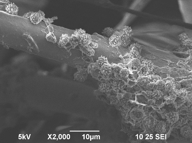 mold growing on HEPA