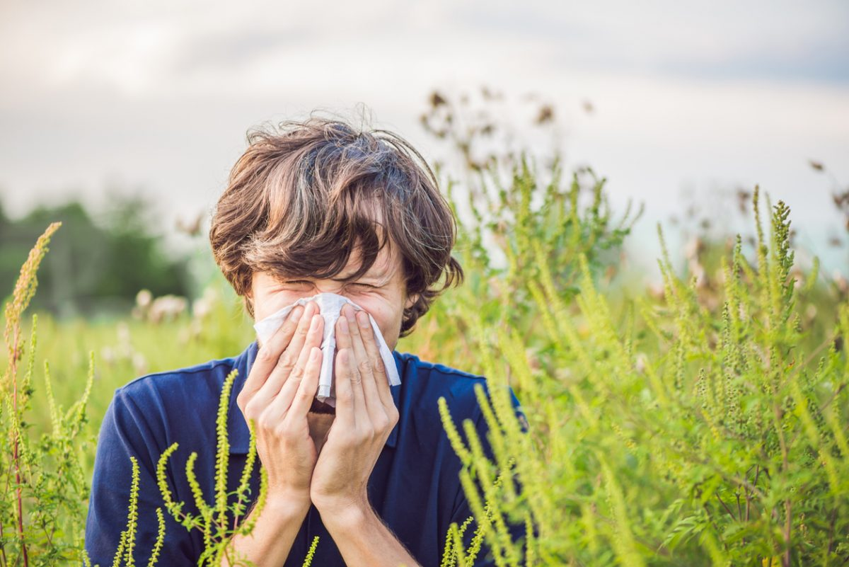 Outdoor summer allergies to ragweed