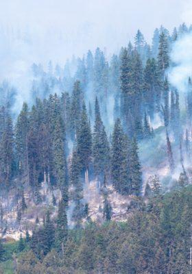 wildfire smoke allergies asthma